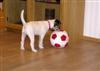 What a ball!