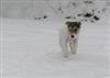 See dog jump
